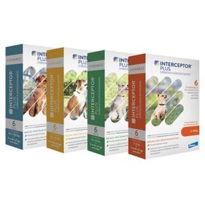 interceptor plus dog medicine miami fl